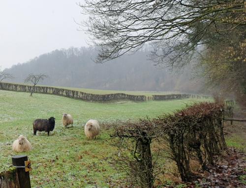 Wandelen met Laura: over tevreden schapen, grote plassen en zakelijke stappen zetten